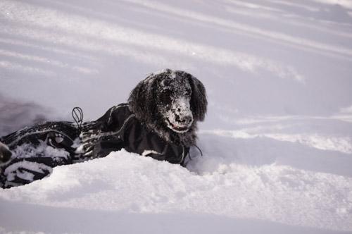 雪遊び パート2_e0232343_1511105.jpg