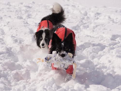 雪遊び パート2_e0232343_15202723.jpg