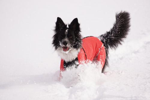 雪遊び パート2_e0232343_15214345.jpg