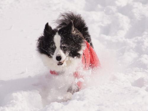 雪遊び パート2_e0232343_1522223.jpg