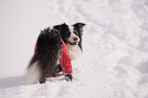 雪遊び パート2_e0232343_15225940.jpg