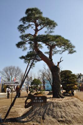 熊本の旅-植木市と黒川温泉-_a0134952_22102881.jpg