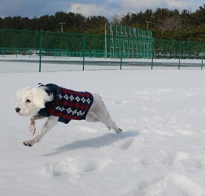 飛ぶ犬_e0158660_091377.jpg