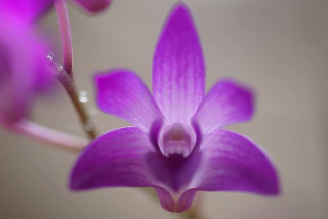 自宅の花 (3)_b0223668_9485687.jpg