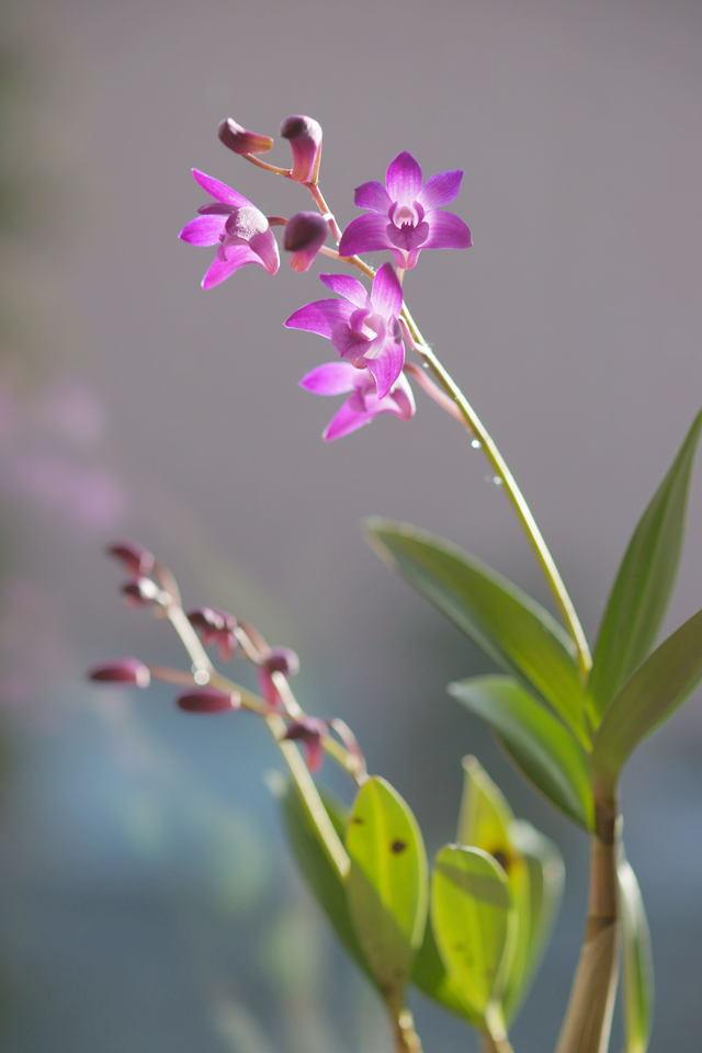 自宅の花 (3)_b0223668_9502591.jpg