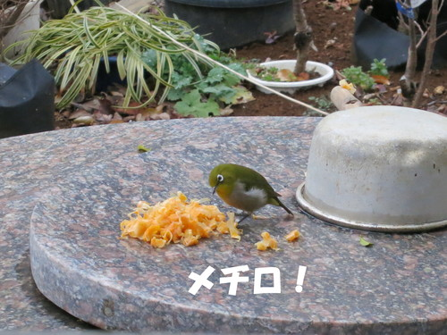 植木 小売店 即売所 販売店 安行 道の駅_b0200291_20173039.jpg