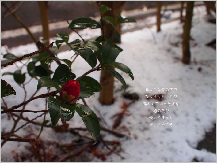雪の中で_d0006718_10271873.jpg