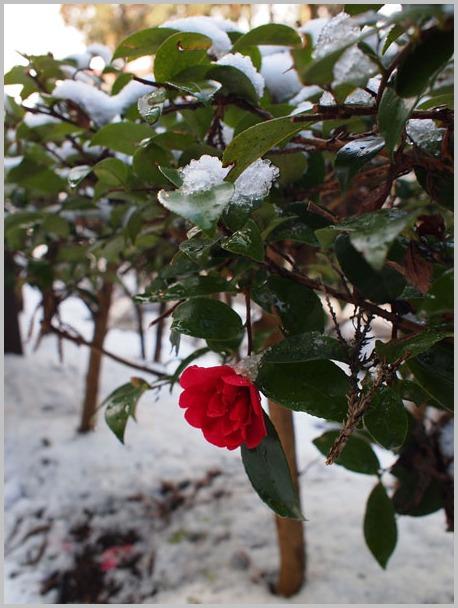 雪の中で_d0006718_10324280.jpg