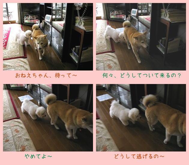 やって来ましたバニラちゃん_e0072023_20122385.jpg