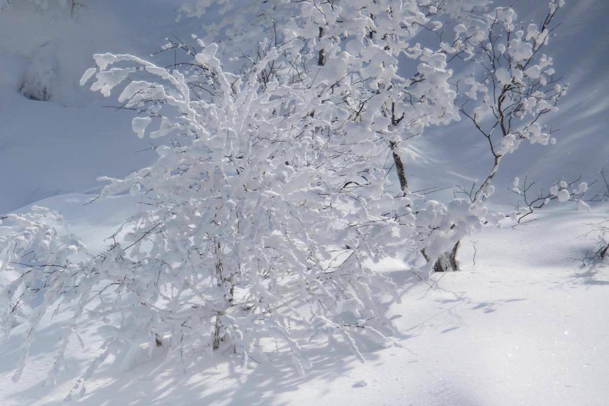 厳冬の箕輪山_d0106628_7172219.jpg