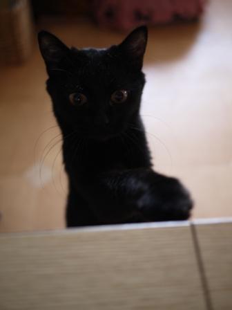 なぬぬ猫 ろった編。_a0143140_22555085.jpg