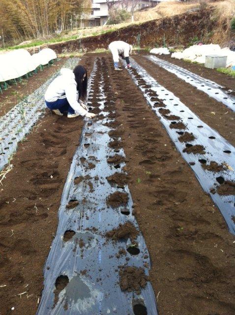 今朝 ジャガイモの植え付け終了しました_c0222448_11593919.jpg