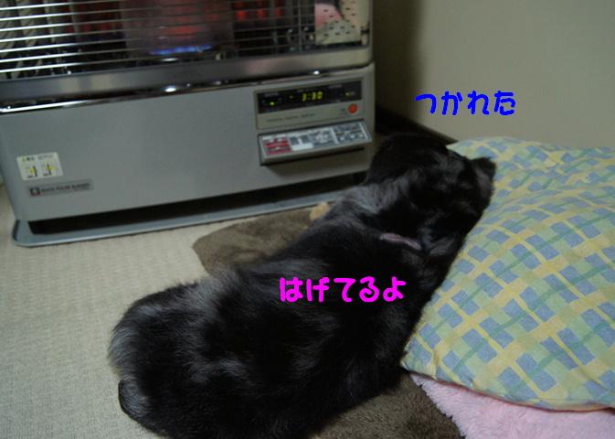 f0195891_17482444.jpg