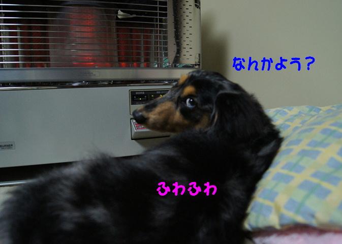 f0195891_17483986.jpg