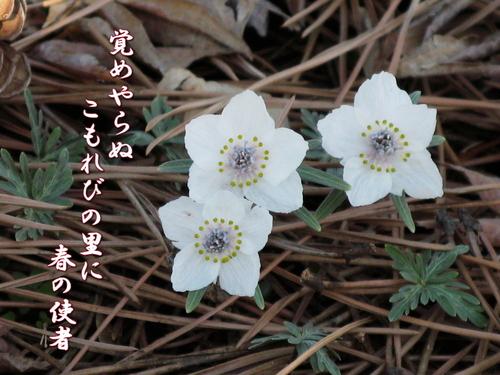 f0137096_19514425.jpg