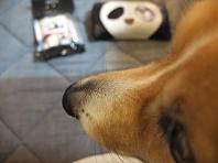 パンダ好きのLEGO育ち!_f0190816_13181897.jpg