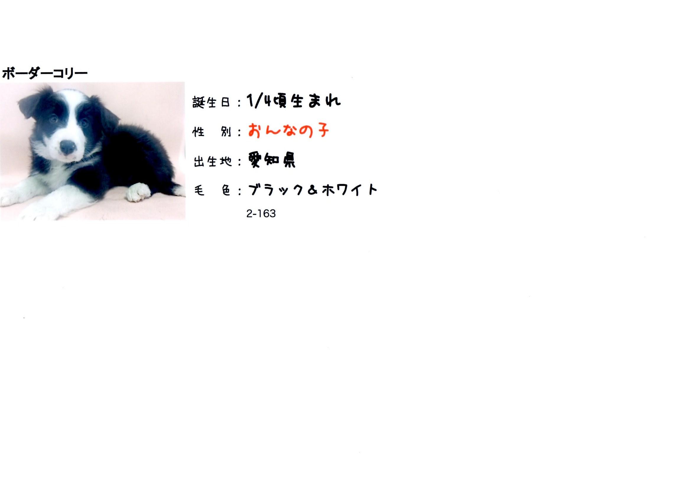 a0232619_1436924.jpg