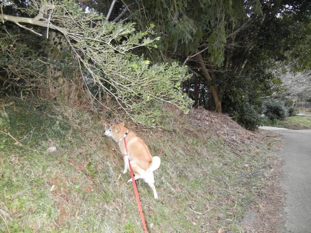 2012年2月27日(月)キョンがうちの庭を食堂に~!_f0060461_13473793.jpg