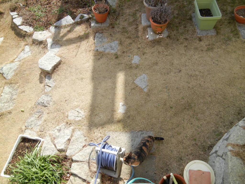 2012年2月27日(月)キョンがうちの庭を食堂に~!_f0060461_13515685.jpg