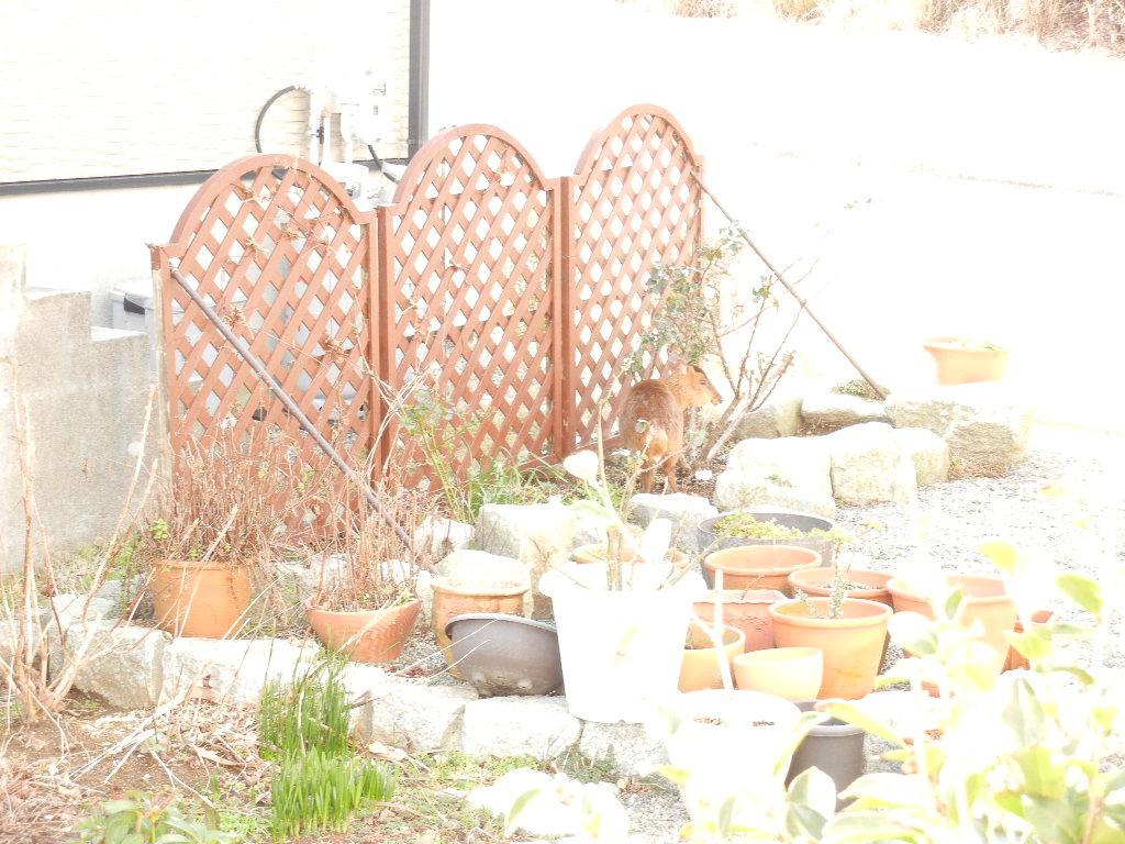 2012年2月27日(月)キョンがうちの庭を食堂に~!_f0060461_13551140.jpg