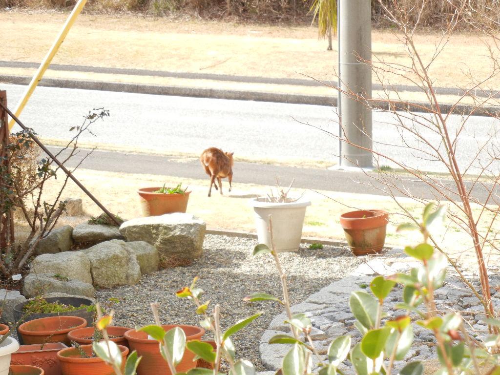 2012年2月27日(月)キョンがうちの庭を食堂に~!_f0060461_13565172.jpg