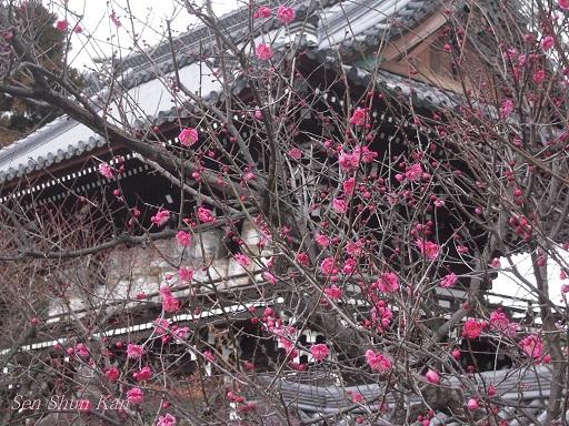 春まだ遠し_a0164068_11175715.jpg