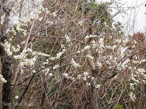 春まだ遠し_a0164068_11185691.jpg