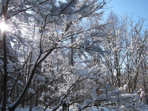 雪景色_d0133485_11564063.jpg