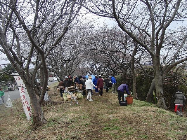 「お花見ウォーク」 元吉原地区の皆さんのおもてなし_f0141310_7444454.jpg