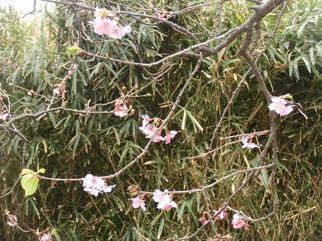 「お花見ウォーク」 元吉原地区の皆さんのおもてなし_f0141310_753256.jpg