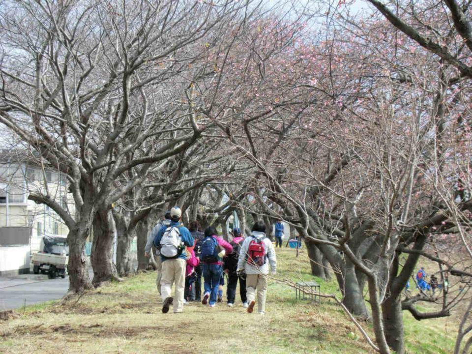 「お花見ウォーク」 元吉原地区の皆さんのおもてなし_f0141310_753290.jpg