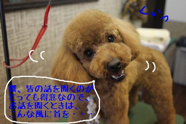b0130018_0542079.jpg