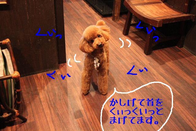 b0130018_0542816.jpg