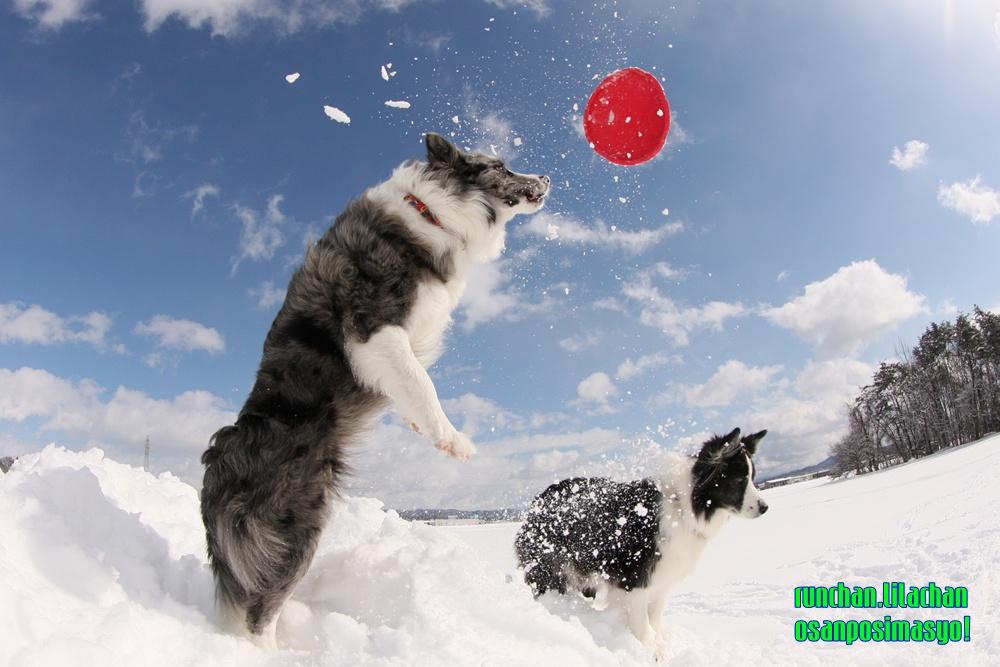 雪遊び_b0192121_18354330.jpg
