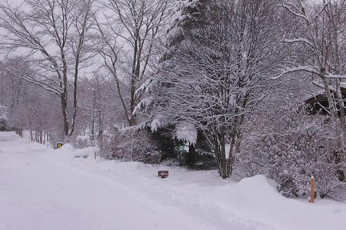 雪の贈り物_b0174425_17304040.jpg