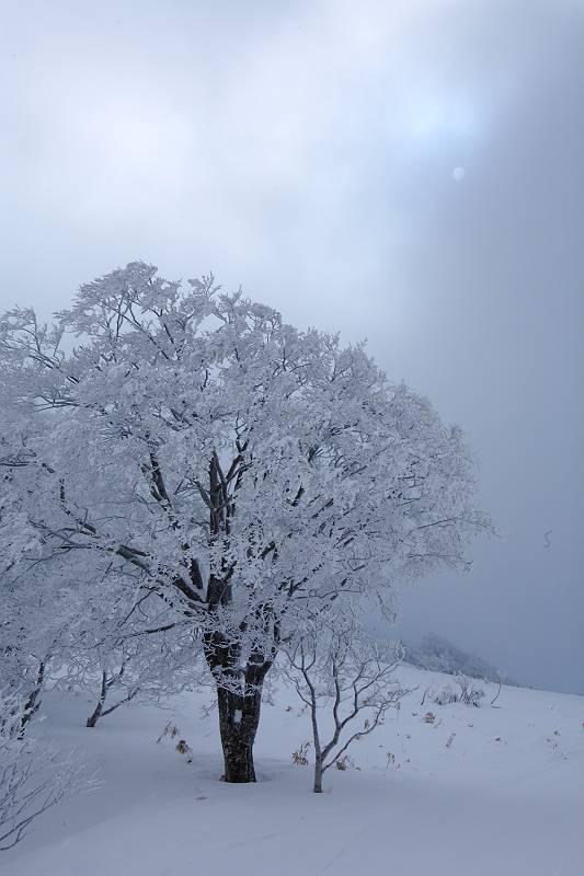 冬の箕輪山の風景_d0106628_1083069.jpg