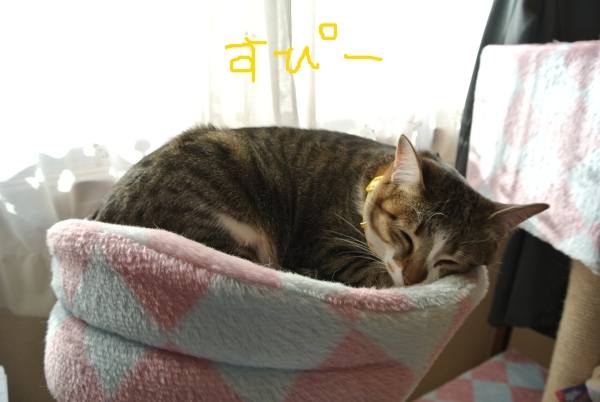 昼間の猫中継_a0099131_12382690.jpg
