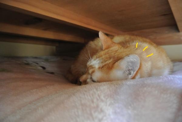 昼間の猫中継_a0099131_12383741.jpg