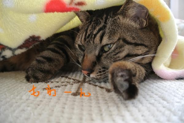 昼間の猫中継_a0099131_12385120.jpg