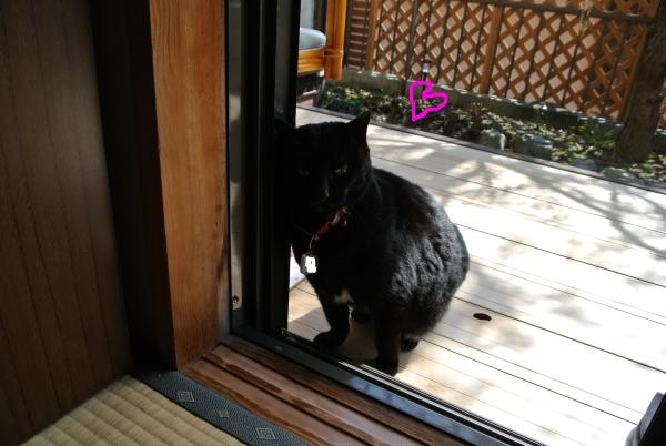 昼間の猫中継_a0099131_12391245.jpg
