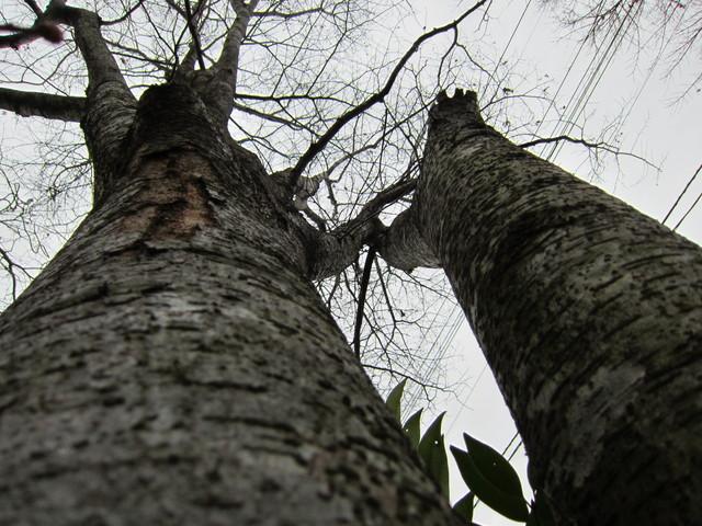 春を待つ庭の木々。_b0207631_11431445.jpg