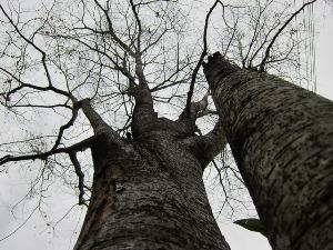 春を待つ庭の木々。_b0207631_1144620.jpg