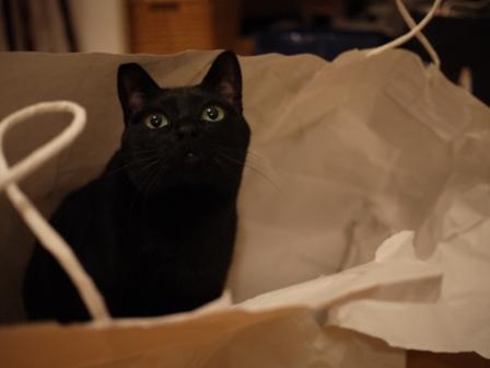 びりびり猫 のぇる編。_a0143140_232491.jpg
