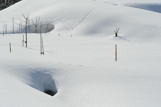 雪模様4_c0093046_19122531.jpg