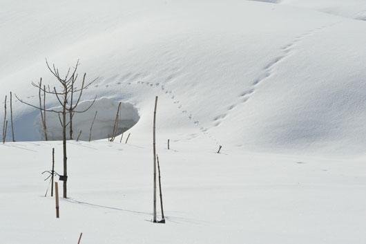 雪模様4_c0093046_19125190.jpg