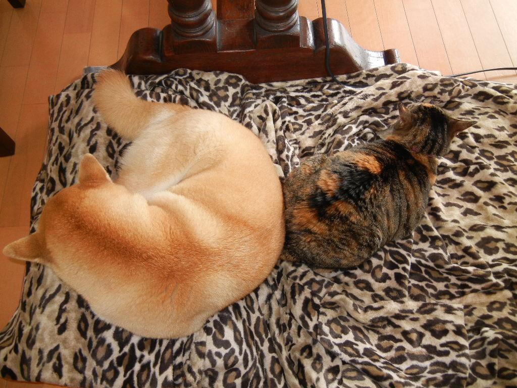 2012年2月28日(火)愛ちゃんと心ちゃんの寝方いろいろ~!_f0060461_11405368.jpg