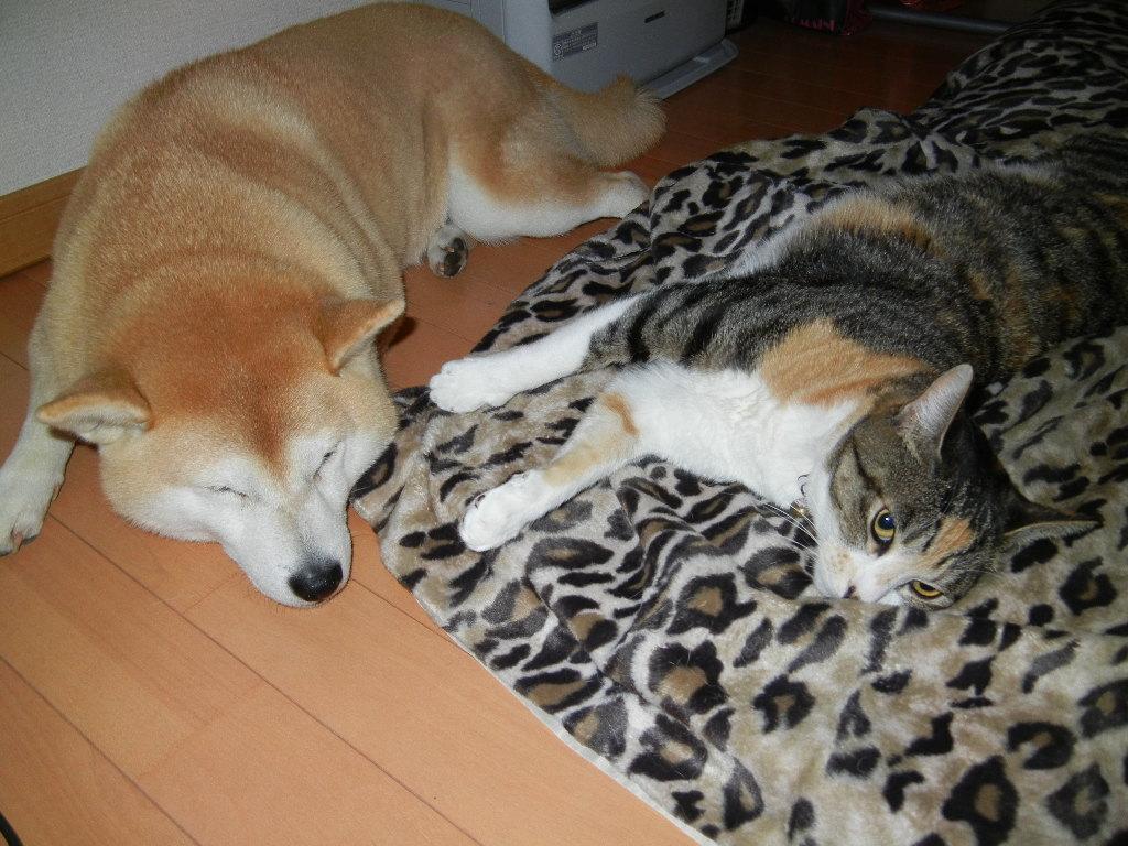 2012年2月28日(火)愛ちゃんと心ちゃんの寝方いろいろ~!_f0060461_1145071.jpg