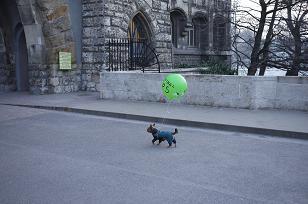 ブダベストで、、「おっ!」_f0226293_16312755.jpg