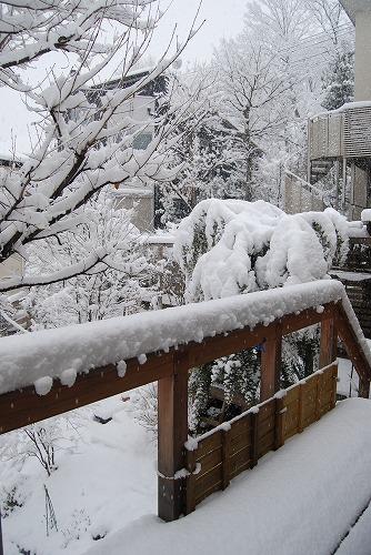やっぱり、雪でした・・・_c0124100_21275337.jpg