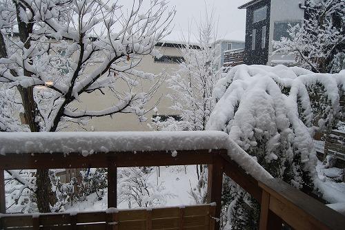 やっぱり、雪でした・・・_c0124100_21281541.jpg